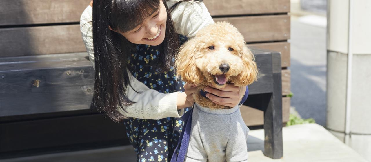 花粉を家に持ち込まないための犬のお散歩対策