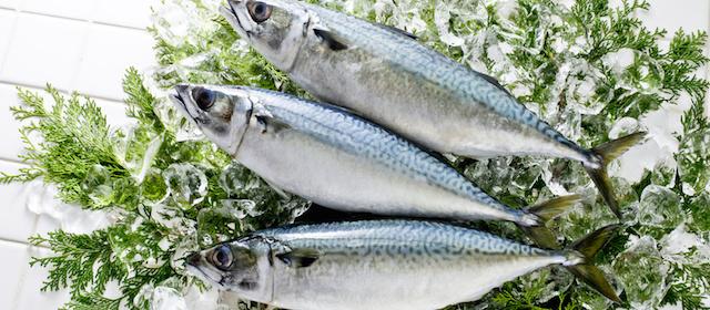 下ごしらえで魚のおいしさが変わる!選び方・おろし方・調理方法