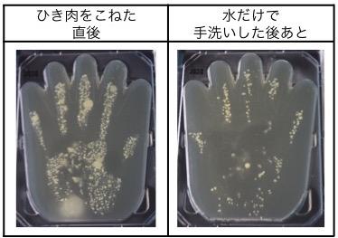 ハンバーグ調理中に手についた菌