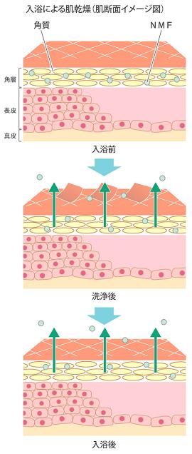 入浴による肌乾燥(肌断面イメージ図)