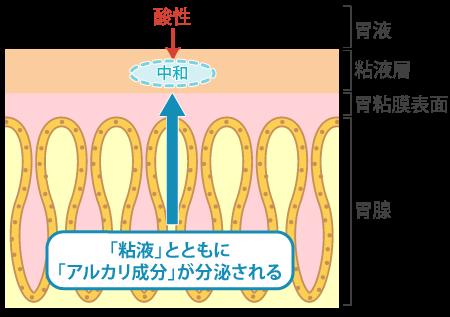 胃液が胃の粘膜を傷つけないのは「粘液」のおかげ