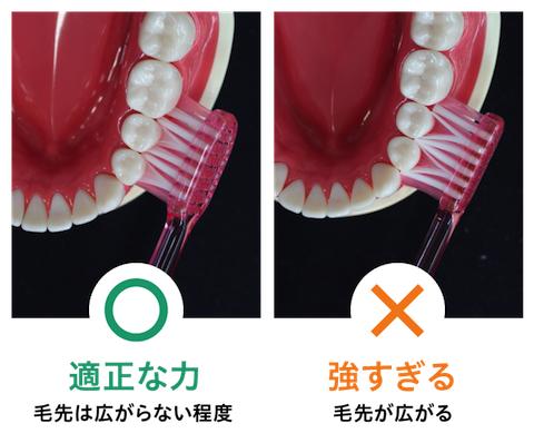歯垢は毛先が広がらない程度の「軽い力」で落とせる